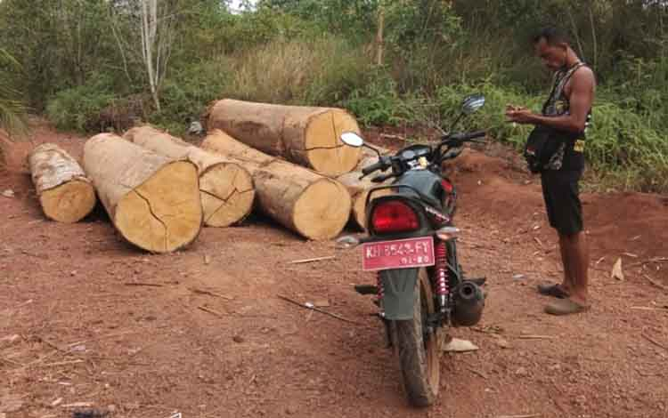 Tumpukkan kayu log dan seorang pria menggunakan kendaraan dinas mengecek kayu yang ditemukan DAD Kotim di Kecamatan Parenggean belum lama ini.
