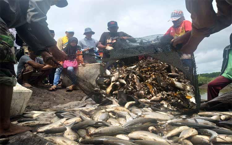 Petani tambak di wilayah Kecamatan Kahayan Kuala Kabupaten Pulang Pisau saat panen ikan