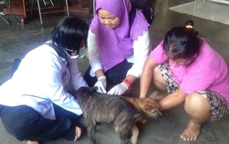 Petugas DKPP Kabupaten Sukamara saat memvaksin rabies anjing milik masyarakat, Sabtu, 14 September 2019. Sejauh ini sudah ada 106 anjing yang divaksin.