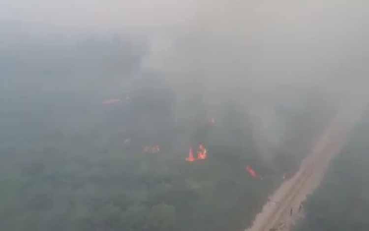 Kebakaran lahan di Kasongan arah Desa Talian Kereng juga menghanguskan kebun kelapa sawit, Rabu 18 September 2019