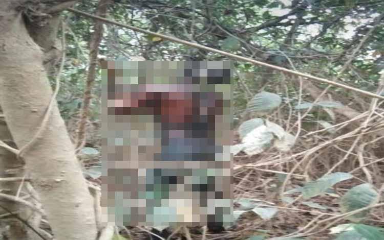 Mayat laki-laki tanpa identitas tergantung di akar bajakah di Desa Samba Katung. Korban tewas ini diduga dibunuh