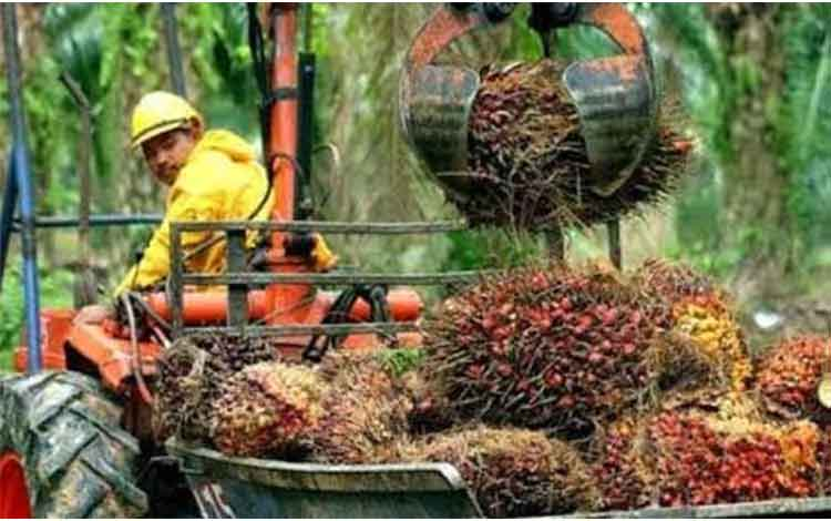 Badan Pengelola Dana Perkebunan Kelapa Sawit (BPDP-KS) sepakat tidak melakukan pungutan ekspor sawit
