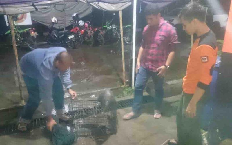 Seekor trenggiling ditemukan warga saat masuk ke permukiman, kawasan perumahan Sawit Raya 1.
