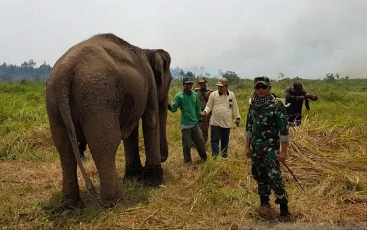 Ilustrasi: Selamatkan Gajah (Dok.Penrem)