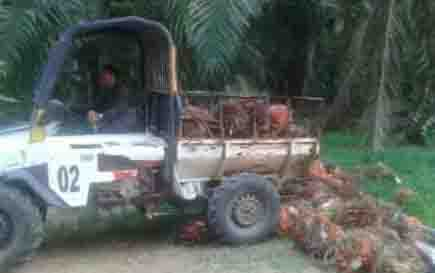 PT HMBP dituding ingkar janji karena memanen sawit di atas lahan yang sudah diserahkan ke warga.