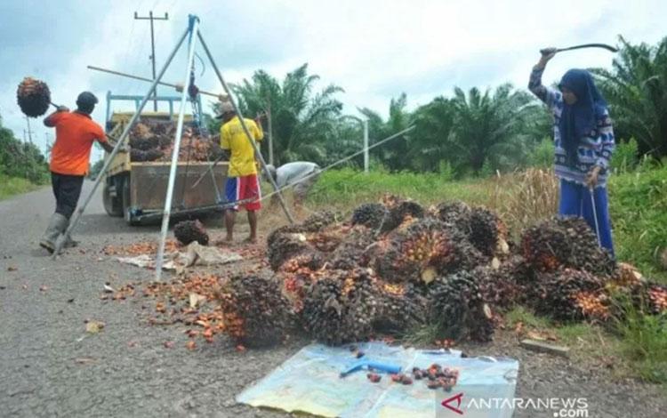 Ilustrasi. Sejumlah pekerja kebun kelapa sawit memilah dan mengangkut hasil panen di kawasan Kalidoni Palembang, Sumsel. (ANTARA FOTO/Feny Selly/ama/17)
