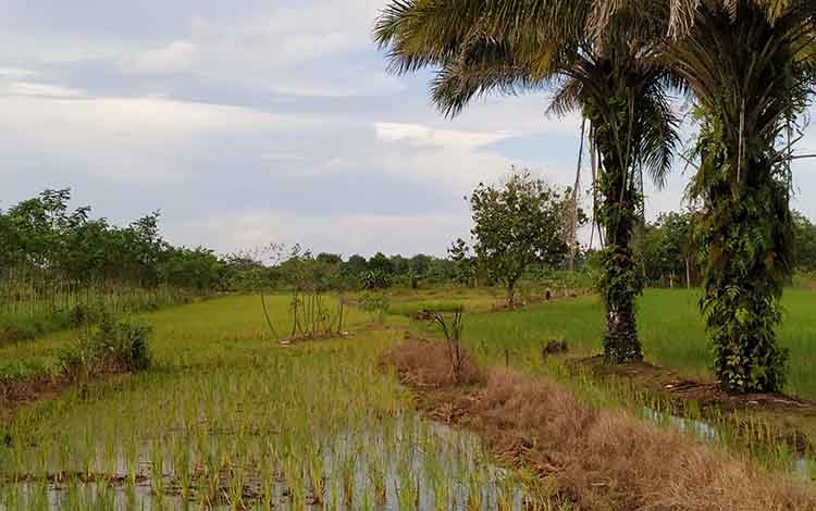 Kepala Dinas Pertanian Pulang Pisau, Slamet Untung Riyanto.