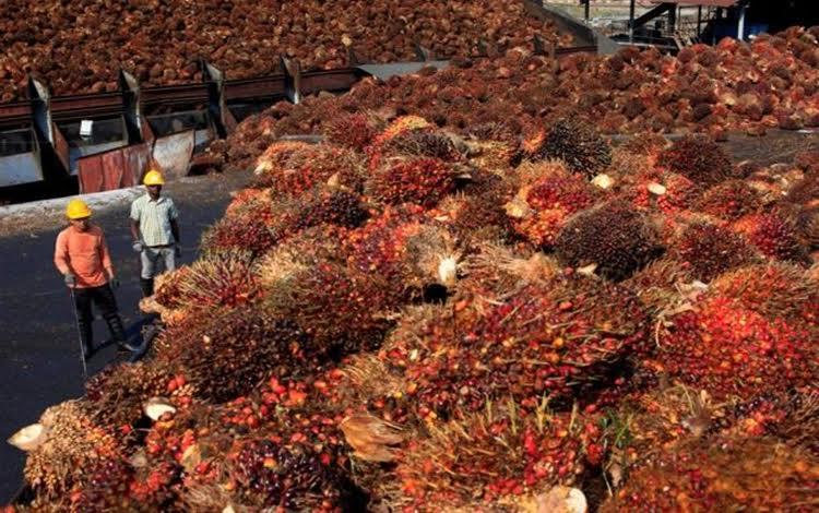 Harga minyak sawit mentah (CPO) berpotensi memasuki tren positif hingga tahun depan karena tren kenaikan permintaan CPO di pasar global seperti di China dan India.