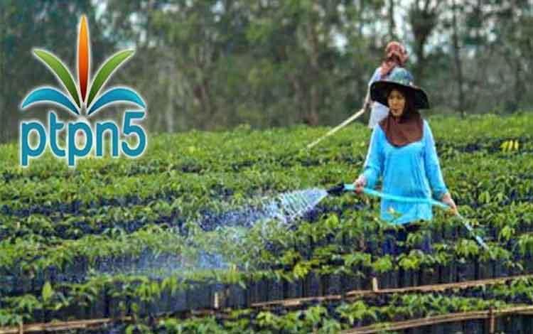 PT Perkebunan Nusantara V menargetkan meraih standar karbon internasional (International Sustainability & Carbon Certification/ISCC) untuk seluruh unit pabrik hingga 100 persen.