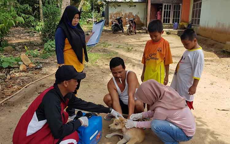 Tim kesehatan hewan dari DinasKetahanan Pangan dan Pertanian Seruyan, saat melakukan vaksin anti rabies