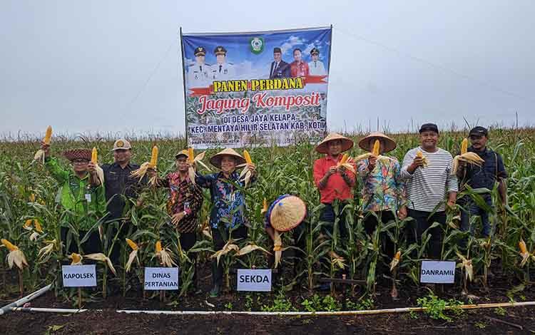 Sekda Kotim Halikinnor memimpin panen perdana jagung komposit di Desa Jaya Kelapa, Keamatan Mentaya Hilir Selatan, Kotim, Kamis, 14 November 2019.