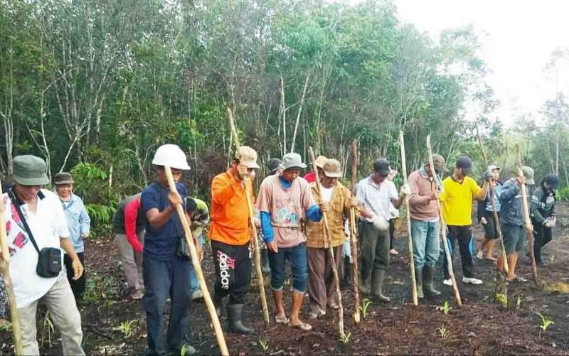 Warga Desa Tewah Pupuh mulai menanam padi, Kamis, 21 November 2019.