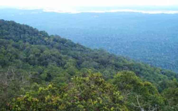 Kondisi hutan Gunung Lumut, Desa Lampeong, Kecamatan Gunung Purei, Kalimantan Tengah.