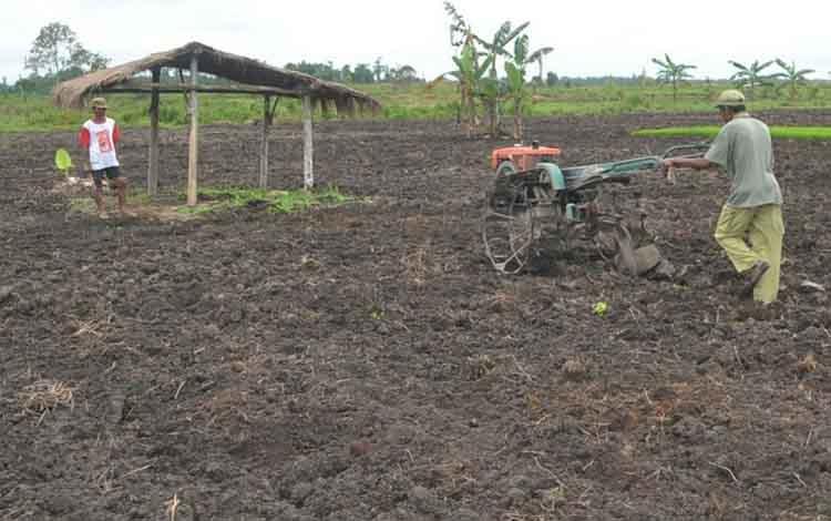 Warga transmigrasi di Desa Pulau Nibung, Kecamatan Sukamara saat mengeloh lahan pertanian. Pada 2020 Pemkab Sukamara kembali mengusulkan pempatan warga transmigrasi baru