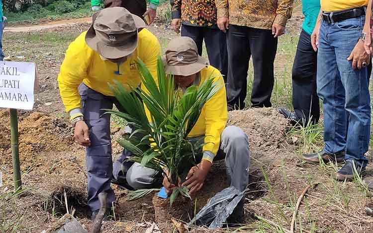 Wakil Bupati Sukamara, Ahmadi menanam bibit sawit di Desa Pangkalan Muntai, Kecamatan Sukamara pada Kamis, 12 Desember 2019