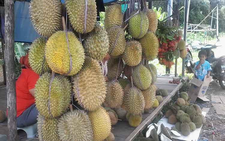 Buah durian yang dijajakan di tepi Jalan Trans Kalimantan wilayah Kasongan.