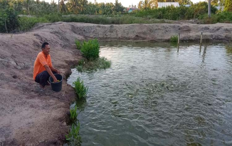 Kolam ikan yang ada di sekitar tempat tinggal kini berhasil dikembangkan untuk menambah penghasilan para nelayan Desa Sungai Undang