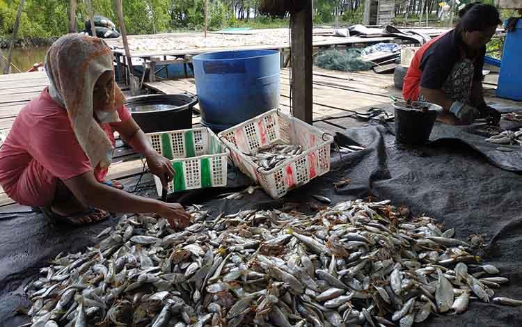 Para ibu di kampung nelayan Desa Sungai Bakau manfaatkan waktu senggang bekerja membersihkan ikaountuk diolah menjadi ikan kering