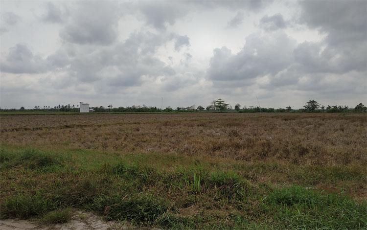 Lahan pertanian milik masyarakat di jalan lingkar luar Kuala Pembuang