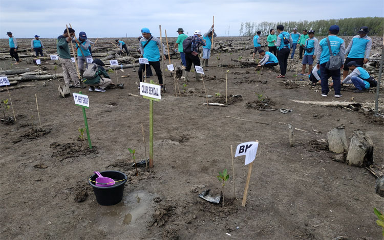 Gerakan penanaman mangrove saat ini gencar dilaksanakan dalam rangka mengembalikan fungsi ekosistem pesisir di Kabupaten Seruyan