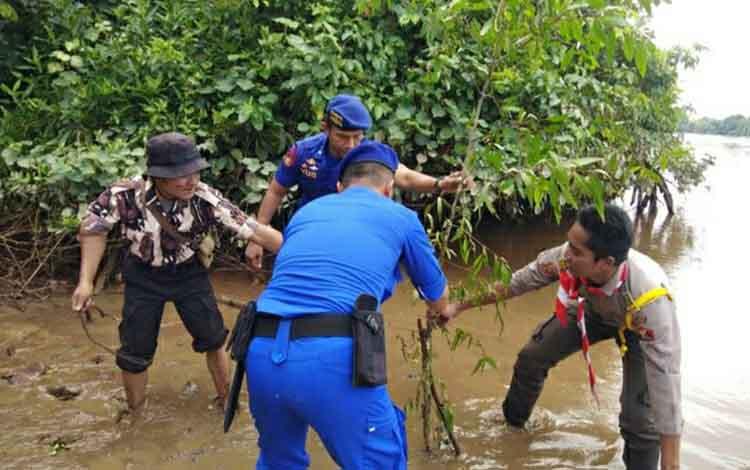 Anggota Satpolair Polres Kapuas bersama Pramuka Saka Bhayangkara menanam pohon mangrove di wilayah pesisir DAS Kapuas