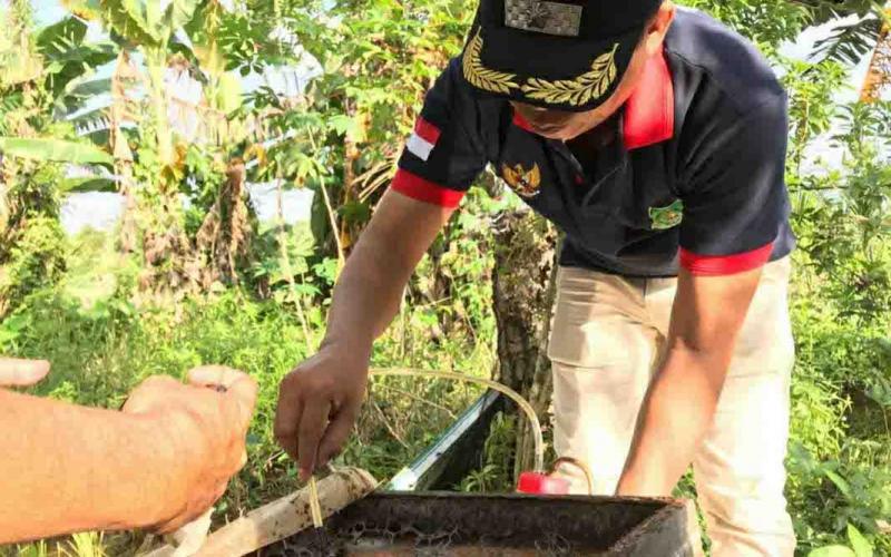 Budidaya madu kelulut di Desa Sei Asam, yang dilakukan Masrawan, kades setempat.