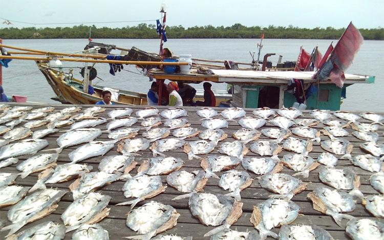 Ikan kering saat proses penjemuran di Pelabuhan Perikanan Kuala Pembuang