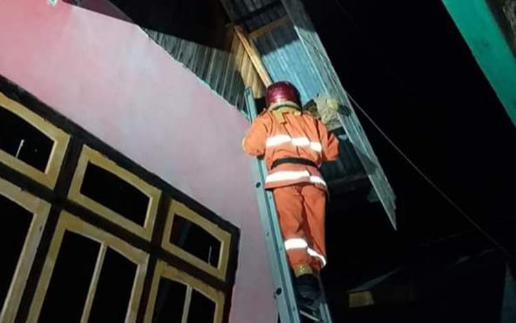 Anggota Damkar Kobar sedang melakukan Operasi Tangkap Tawon (OTT) dipemukiman warga