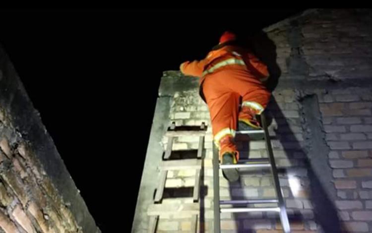 Anggota Damkar Kobar sedang melakukan operasi tangkap tawon (OTT) di permukiman warga.
