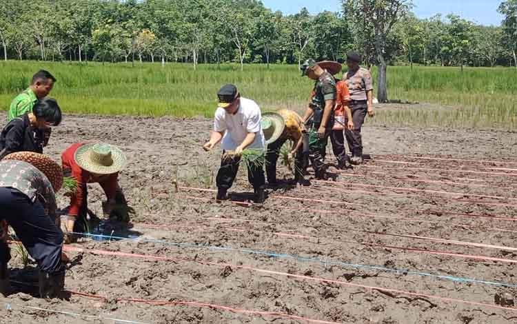 Gubernur Kalteng, Sugianto Sabran bersama Bupati Barsel, Eddy Raya Samsuri, menanam padi bersama, Kamis, 23 Januari 2020.