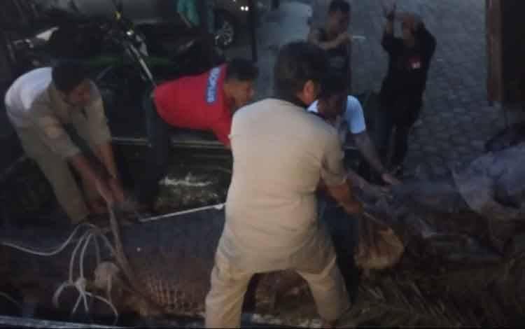 Buaya sinyulong yang ditemukan warga Desa Arga Mulya saat tiba di Kantor SKW II Pangkalan Bun dan dipindahkan dari truk pengangkut ke mobil