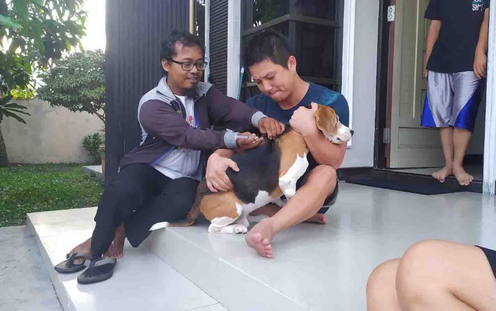 Petugas memberikan vaksin rabies untuk anjing peliharaan di Palangka Raya.