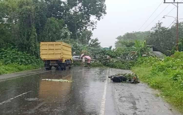 Kondisi jalan lintas kalimantan di Desa Mitin setelah terjadi kecelakan akibat pohon tumbang.