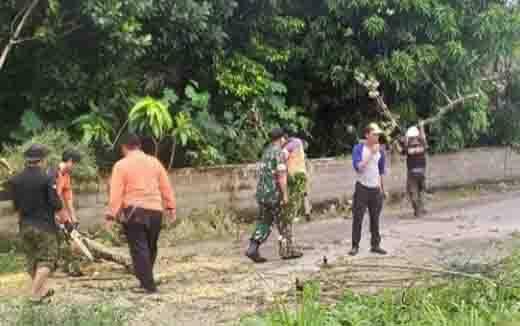 Petugas BPBD memangkas pohon rawan tumbang di Jalan Bromo, Palangka Raya, Rabu, 19 Februari 2020.