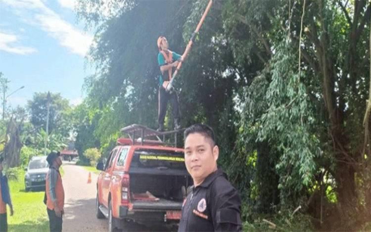 Sejumlah warga dan anggota BPBD memotong dan pembersihan ranting pohon.