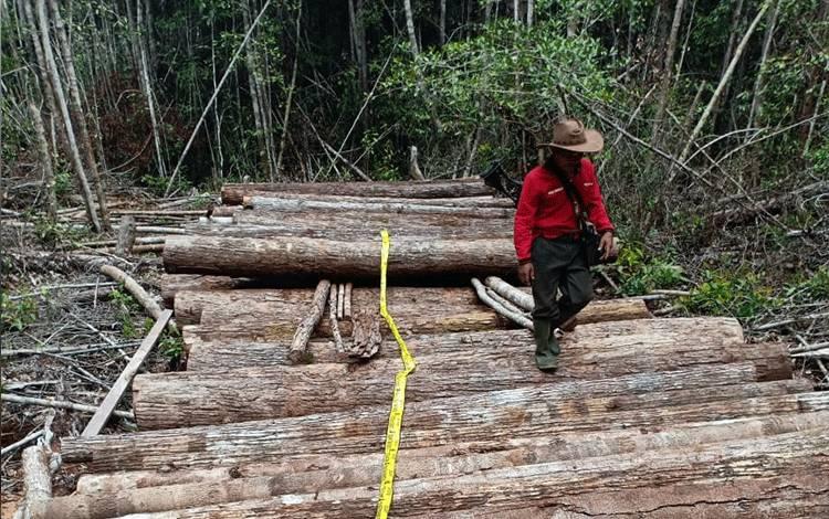 Tumpukan kayu ilegal (illegal logging) yang dipasang garis polisi karena tidak memiliki izin, Senin, 9 Maret 2020.