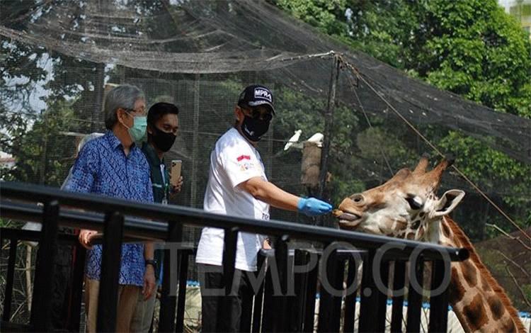 Ketua MPR RI Bambang Soesatyo memberi makan jerapah di Bandung Zoological Garden di Bandung, Jawa Barat, Jumat 15 Mei 2020. (foto : tempo.co)
