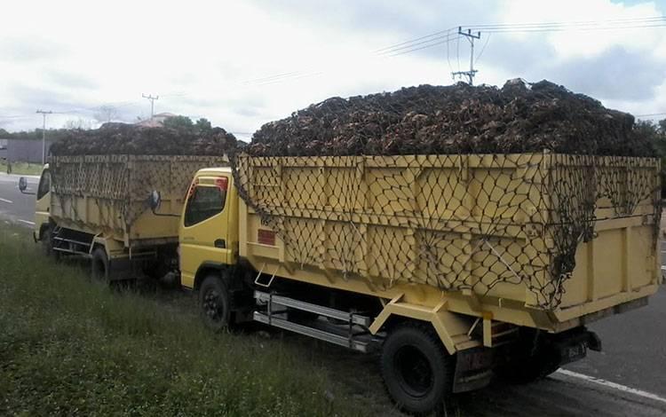 Truk sarat muatan TBS sawit tengah parkir di Jalan Tjilik Riwut Kasongan sebelum menuju pabrik.
