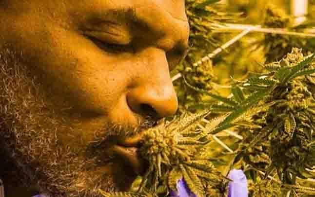 Mike Tyson mengecup tanaman ganja di sebuah ladang ganja di California. Tyson memulai membuka bisnis ganja setelah tumbuhan tersebut dilegalkan untuk keperluan pengobatan dan rekreasi secara terbatas di California. (foto : Instagram/Tysonranchofficial)