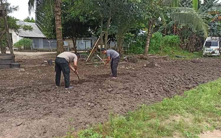 Dalam usaha memanfaatkan lahan kosongdi halaman asrama, jajaran Polsek Hanau melakukan penggarapan untuk ditanami sayuran.