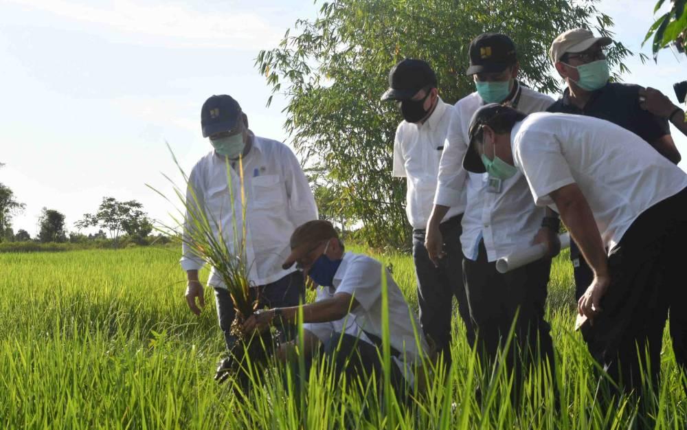 Menteri PUPR mengecek lahan persawahan di Pulang Pisau untuk program Food Estate.