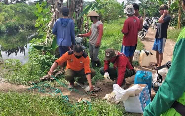 Petugas dari BKSDA saat memasang jerat buaya di Sungai Desa Handil Sohor.