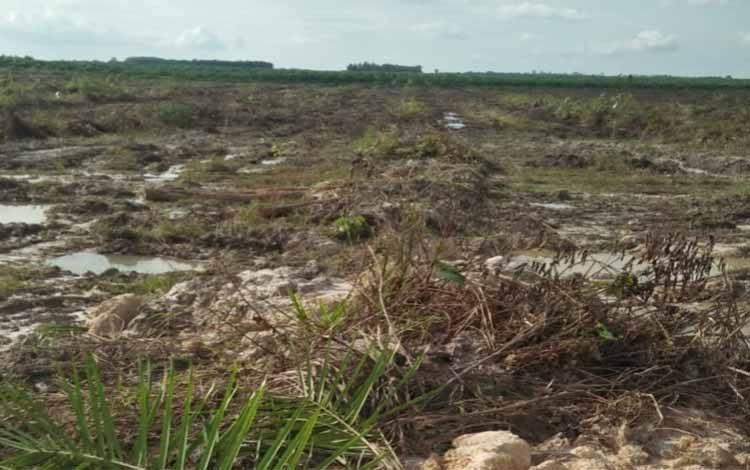Lahan Kelompok Tani Simpei Pambelum yang digarap oknum perusahaan untuk kebun sawit