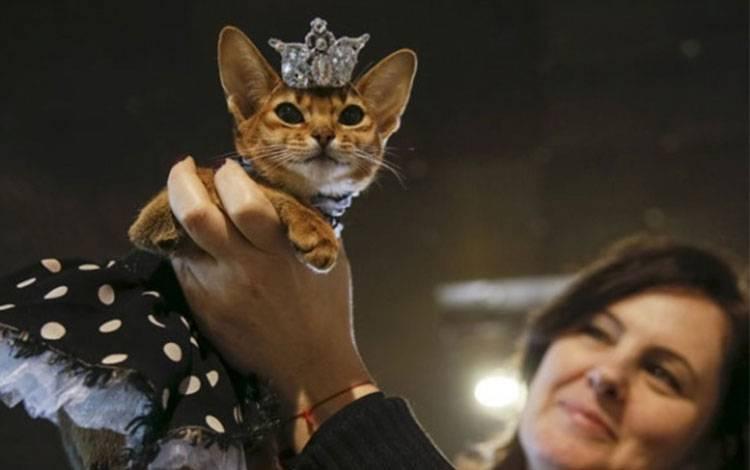 Ilustrasi kucing peliharaan. REUTERS/Valentyn Ogirenko
