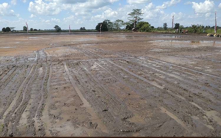 Lahan garapan optimalisasi lahan di Desa Belanti II, Kabupaten Pulang Pisau.