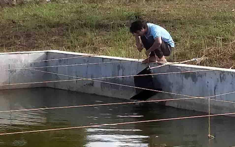 Kolam budidaya ikan pipih di BBI Telaga Pulang, Seruyan.