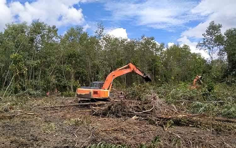 Lahan Kelompok Tani Simpei Pambelum Desa Bukit Raya yang digarap perusahaan perkebunan