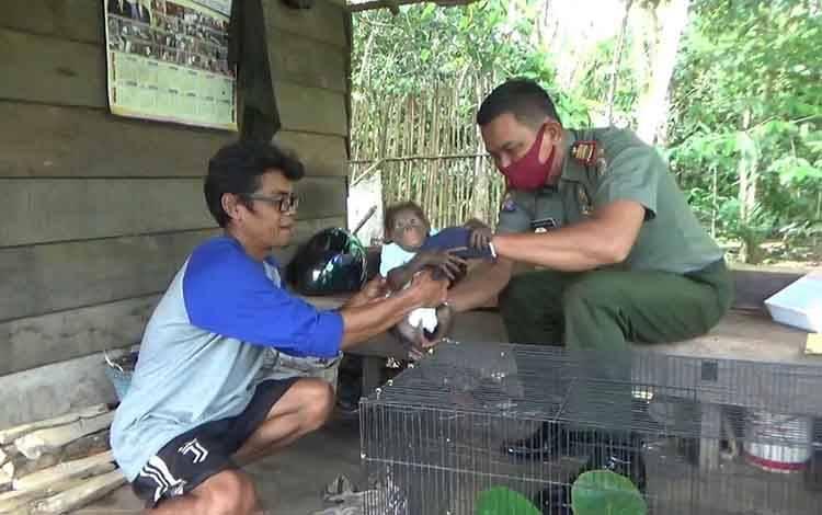 Komandan BKSDA Pos Jaga Sampit Muriansyah saat mengevakusi bayi orangutan yang diserahkan oleh masyarakat. Kondisi hewan tersebut dalam keadaan flu.