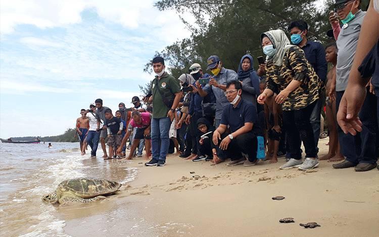 Bupati Kobar Hj Nurhidayah saat melepas penyu bersisik. Dia berharap di era adaptasi kebiasaan baru, masyarakat atau pengunjung dapat menjaga kebersihan pantai.