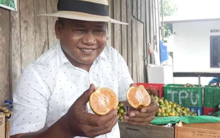 foto : Wayan Supadno petani jeruk chokun atau jeruk madu Thailand di kebun miliknya yang berlokasi di Desa Kumpai Batu Atas